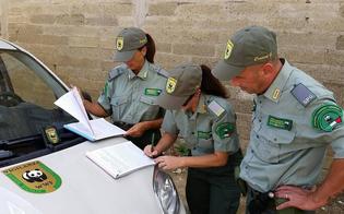 http://www.seguonews.it/a-caltanissetta-13-cacciatori-denunciati-e-10-fucili-sequestrati-il-wwf-territorio-in-balia-dei-bracconieri