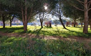 https://www.seguonews.it/delia-espropriata-la-villetta-antistante-la-piazza-toronto-per-pubblica-utilita-diventera-un-parco-inclusivo-con-spazi-attrezzati