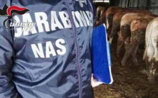 https://www.seguonews.it/mattatoio-abusivo-sequestrato-nel-catanese-animali-macellati-tra-rifiuti-speciali-e-deiezioni