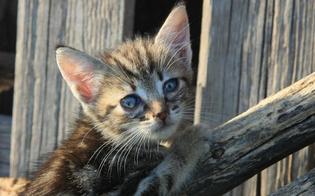 https://www.seguonews.it/coronavirus-variante-inglese-in-un-gatto-contagiato-dai-padroni-e-il-primo-caso-in-italia