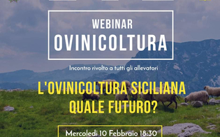 https://www.seguonews.it/ovicoltura-siciliana-quale-futuro-webinar-su-youtube-a-cura-del-comune-di-mussomeli