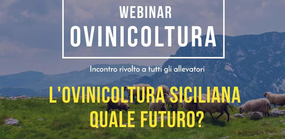 """""""L'ovinicoltura siciliana: quale futuro?"""" Webinar su YouTube a cura del Comune di Mussomeli"""