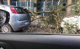 https://www.seguonews.it/maltempo-a-caltanissetta-alberi-caduti-tegole-e-cartelloni-pericolanti-numerosi-interventi-dei-vigili-del-fuoco