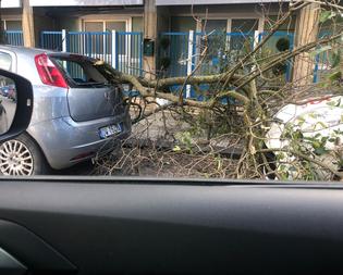 Maltempo. A Caltanissetta alberi caduti, tegole e cartelloni pericolanti: numerosi interventi dei vigili del fuoco
