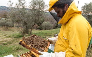 https://www.seguonews.it/miele-opportunita-per-giovani-agricoltori-il-comune-di-mussomeli-organizza-un-webinar