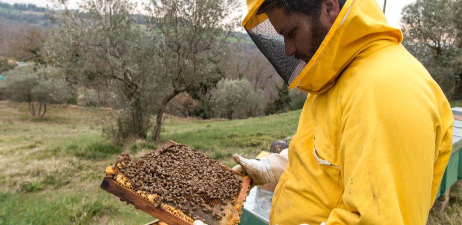 Miele, opportunità per giovani agricoltori: il Comune di Mussomeli organizza un webinar