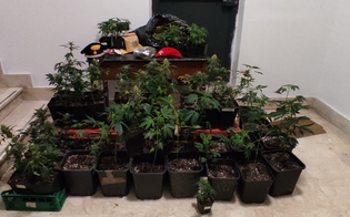 https://www.seguonews.it/coltivava-54-piante-di-marijuana-dentro-casa-40enne-di-agira-arrestato-dai-carabinieri