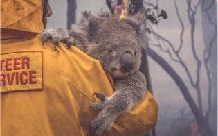 https://www.seguonews.it/incendi-australia-dopo-linferno-restano-solo-35000-koala