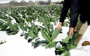https://www.seguonews.it/in-sicilia-colture-a-rischio-per-il-forte-freddo-coldiretti-grosse-perdite-di-frutta-e-verdura