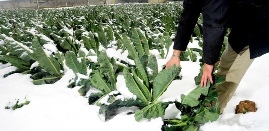 """In Sicilia colture a rischio per il forte freddo, Coldiretti: """"Grosse perdite di frutta e verdura"""""""