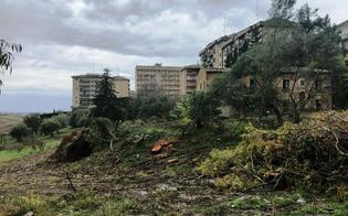 Caltanissetta, alberi abbattuti per far posto a un palazzo, Janni: