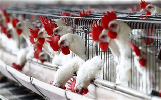 https://www.seguonews.it/influenza-aviaria-in-russia-ecco-il-motivo-per-cui-litalia-non-ha-nulla-da-temere