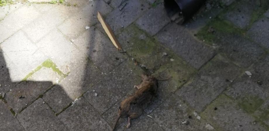 Topi nei pressi della Casa Circondariale di Caltanissetta: tutta colpa di una voragine