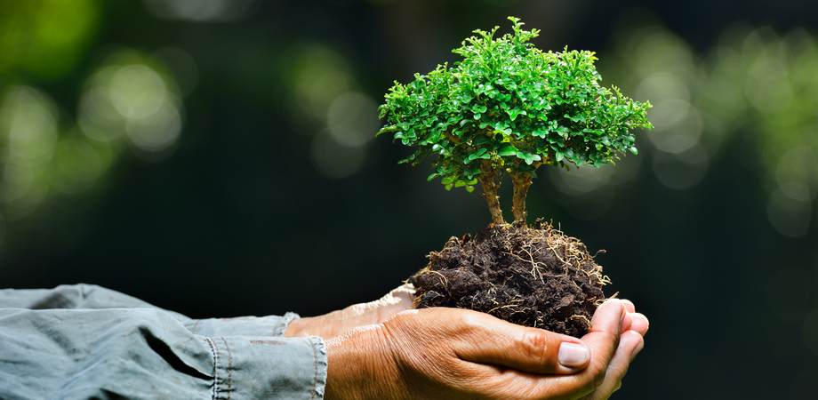 """""""L'uomo e l'ambiente: rischi e risorse"""", workshop al liceo Mignosi di Caltanissetta"""