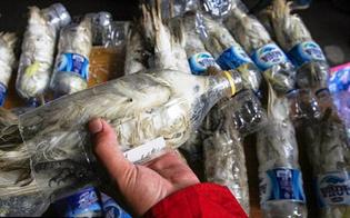 https://www.seguonews.it/orrore-del-traffico-illegale-di-specie-selvatiche-pappagalli-vivi-chiusi-in-bottiglie-di-plastica