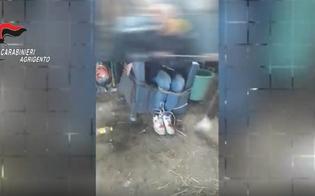 https://www.seguonews.it/disabili-torturati-ed-ex-assessore-aggredito-fermati-due-14enni-di-licata
