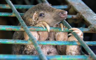 https://www.seguonews.it/loms-chiede-di-fermare-la-vendita-di-animali-selvatici-vivi-nei-mercati-sono-la-fonte-dei-virus