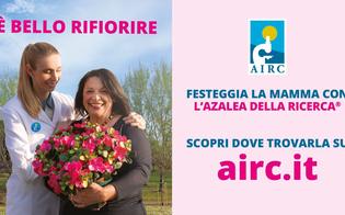 La Nissa Rugby a fianco dell'Airc: l'azalea della ricerca in piazza Garibaldi a Caltanissetta