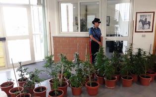 https://www.seguonews.it/coltivavano-marijuana-in-un-casolare-abbandonato-tra-riesi-e-mazzarino-arrestati-due-fratelli