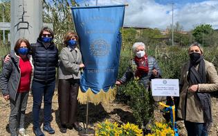 https://www.seguonews.it/caltanissetta-nel-giardino-della-legalita-saranno-piantumati-alberi-per-celebrare-i-bimbi-nati-nel-2020