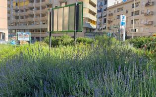https://www.seguonews.it/caltanissetta-piazza-trento-sommersa-dalle-erbacce-e-spunta-anche-un-cartellone-protestano-i-residenti