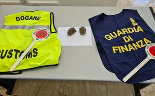 https://www.seguonews.it/sequestrate-tartarughe-trasportate-illegalmente-da-tunisi-a-palermo