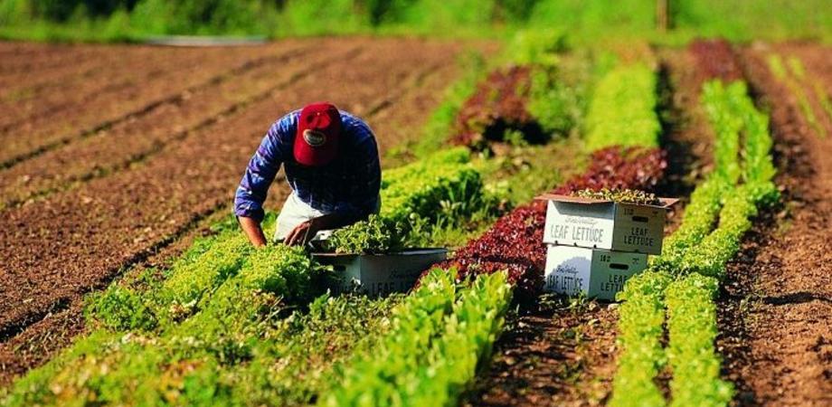 Assegnati 115 milioni di euro agli agricoltori siciliani: domani le graduatorie