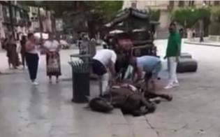 https://www.seguonews.it/cavallo-stramazza-a-terra-a-palermo-trainava-carrozza-per-i-turisti
