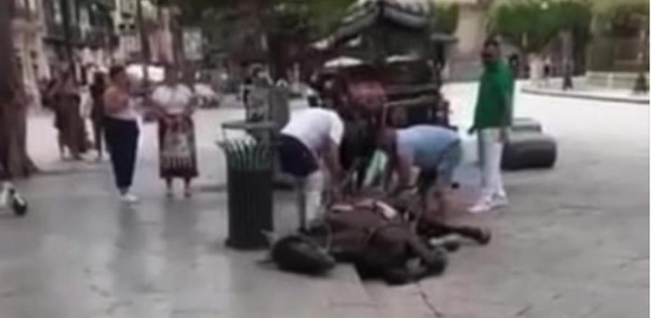 Cavallo stramazza a terra a Palermo: trainava carrozza per i turisti