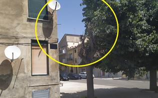 https://www.seguonews.it/esposto-del-wwf-a-san-cataldo-mutilato-e-deturpato-un-tiglio-in-via-pirandello