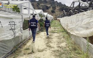 Scoperta a Gela una piantagione di marijuana: sequestrati 40 chili di droga del valore di 3,5 milioni di euro