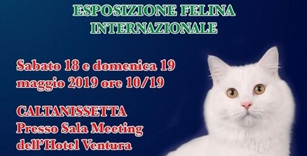 Esposizione Felina Internazionale