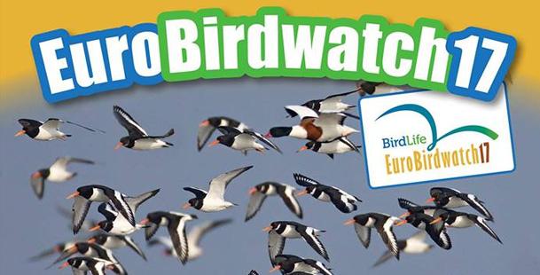 EuroBirdwatch17 - I Big Day della migrazione