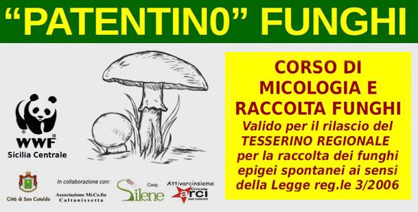 Corso di Micologia e raccolta Funghi