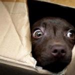 Abbandono di cuccioli, illegalità diffusa a Caltanissetta