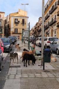 Cani randagi in viale Regina Margherita