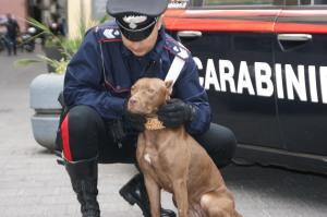 In aumento i crimini contro gli animali