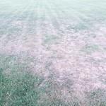 Le zolle sull'erba