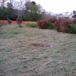 Il giardino ripulito dalle erbacce