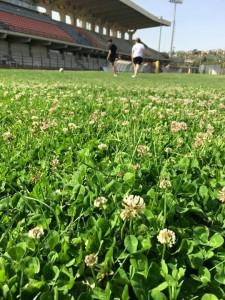 L'erba incolta allo Stadio Tomaselli