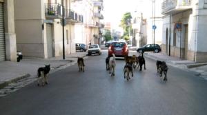 Randagismo: è emergenza a Caltanissetta