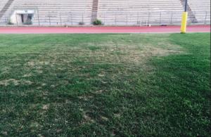 """Il manto dello stadio """"Tomaselli"""""""