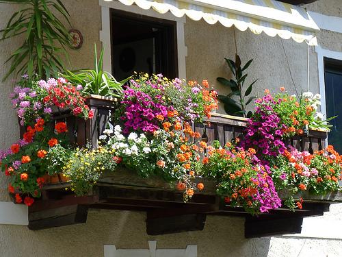 a caltanissetta primo concorso balconi fioriti On balconi invernali fioriti